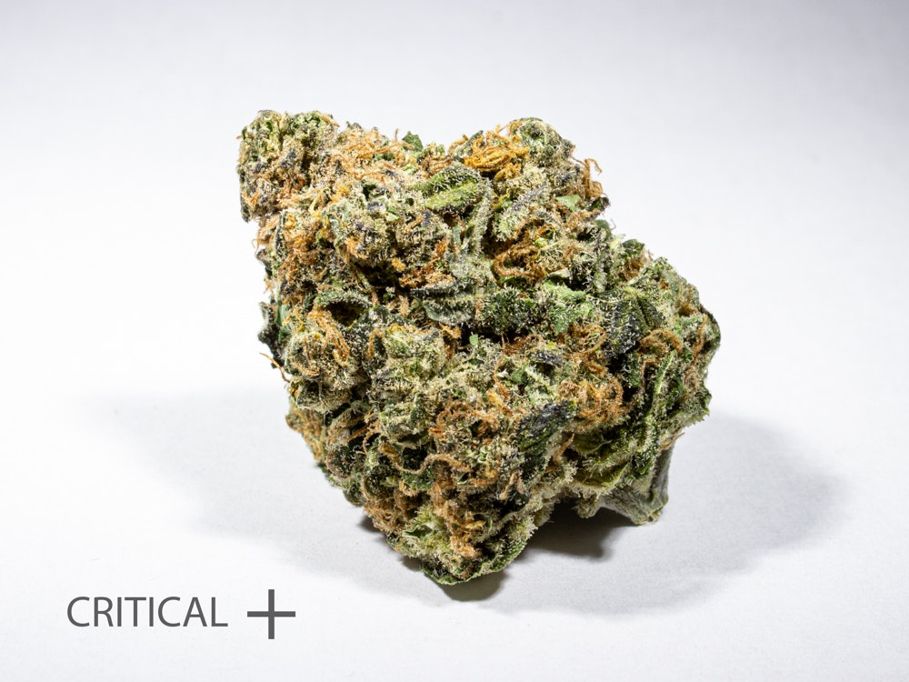 Critical + Flower Indica Dominant